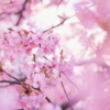 【立川】春、新生活のおこづかい稼ぎに!WワークOKな立川のキャバクラ&ガールズバーランキング