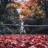 【半径100mの写真展】秋の喜多家 - A7R3 x CONTAX Planar 50mm F1.4 -