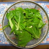 【家庭菜園】チンゲンサイを収穫しました
