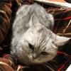 愛猫が腎不全に片足突っ込んだ件