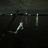 釣果続々! 秋のハイシーズン! 夜釣りシーバス  岡崎大樹寺店