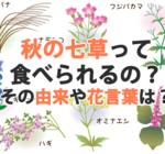 秋の七草って食べれられるの?その由来や花言葉は?