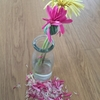 切り花のガーベラが咲ききった