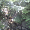 北山緑化植物園へ