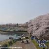 三重県四日市市の海蔵川桜まつり