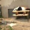 上野動物園のジャイアントパンダを見るまで90分待った