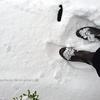 雪中行軍とシンボルツリー