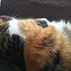 【愛猫日記】毎日アンヌさん#305