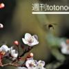 【週刊totonoeru】春の訪れを感じつつ、仮説検証を繰り返した1週間[習慣化週次レビュー 2018/3 第3週]