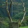 ハワイ島はビーチだけじゃない!ワイピオ渓谷で乗馬体験をしよう(集合~厩舎へ)