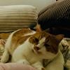 夏、それは愛猫家にとって最高に悲しい問題がやってくる季節