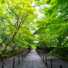 京都西山三山「総本山 光明寺」
