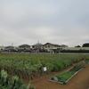 神原町花の会(花美原会)(279)     住宅地に花と緑が映え人々の交流と笑顔がいっぱいある花畑