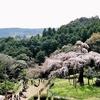 桜めぐりの旅。小田原長興山と身延山、そして盆栽