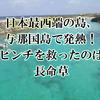 日本最西端の島、与那国島で発熱!ピンチを救ったのは長命草