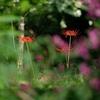 伽耶院の彼岸花 #カラフル