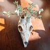 豆鹿頭骨鉢 X「琴爪菊」
