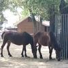 【愛知】のんほいパークに行ってきた!『動物園ゾーン』は動物との距離が近い!