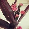 お花の組み合わせ