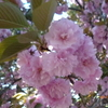 桜前線通過