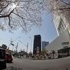 新型コロナ2年目の中野区の桜(2021年4月)
