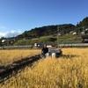 秋の畑作業