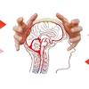脳科学・澤口先生の講演から学ぶ ~こどもの脳を育てるオススメ方法