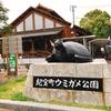 和歌山県【観光・道の駅】道の駅「紀宝町 ウミガメ公園」でウミガメにエサやりをしてきた!