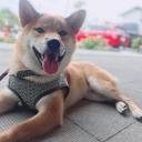 柴犬の新太郎×「目が見えないケド何か?」