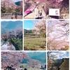 日帰りバスツアー 三重*奈良の桜の旅~三多気の桜と高見の郷しだれ桜