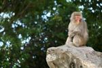 快晴の上野動物園で、動物たちをたくさん見てきたぞー!