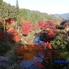 大井平公園の紅葉(2016年)