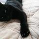 今日の黒猫モモ&白黒猫ナナの動画ー1047