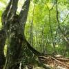 「かぐや姫の物語」も参考にしたという40年前の記録映画「奥会津の木地師」