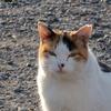 12月4日 江戸川区鹿骨から初の千葉県市川市へ 猫さま歩き