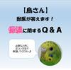 【鳥さん】鳥の獣医が答えます!鳥の保温に関するQ&A