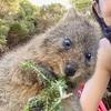 【Perth】世界一幸せな動物クオッカに会いにロットネス島へ!!!ロットネス島での過ごし方の極意教えます!!!