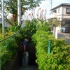 佐鳴湖(3)