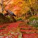 関西の紅葉絶景スポットを振り返る~有名所から穴場まで~②