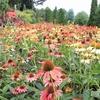 やまぐちフラワーランド|四季折々の花を楽しめる花の庭園