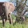 象にガンが少ない理由が解明された