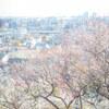 春の訪れを感じる岡本梅林公園に撮影に行ってきた話。