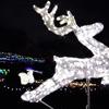 クリスマスイルミネーション 今年も開催(馬見丘陵公園 21)