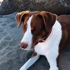 うちの犬のこと 生命の存在を100%受け入れるということ 出会い編