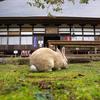 高さ6メートルのウサギ観音は目が光る