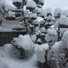 日本では大雪