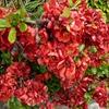 『麒麟がくる』14回 道三vs信長と儚く散った紅の花・深芳野