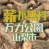 万力公園で伐採されたケヤキが無料で配布されます 山梨市
