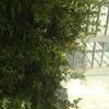 """【木曽さんちゅうは""""ぷちビッグダディ""""】第862回「ぷちビッグダディは盗撮する」"""