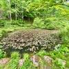 穴地獄横の池(仮称)(群馬県中之条)